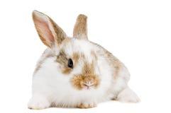 детеныши кролика младенца одного Стоковое Фото
