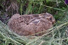 детеныши кролика травы стоковая фотография rf