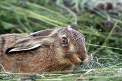 детеныши кролика травы стоковое фото