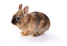 детеныши кролика Стоковое Фото