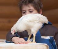 детеныши курицы мальчика Стоковая Фотография RF