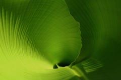 детеныши листьев Стоковые Изображения RF