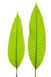 детеныши листьев стоковая фотография