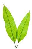 детеныши листьев стоковое изображение