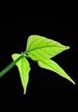 детеныши листьев стоковые фотографии rf