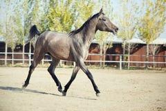 детеныши лошади Стоковые Изображения