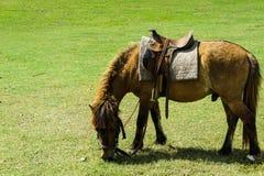 детеныши лошади Стоковое Изображение