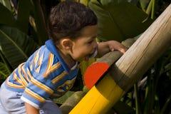 детеныши мальчика взбираясь Стоковое Изображение RF