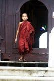 детеныши монаха Стоковые Фото