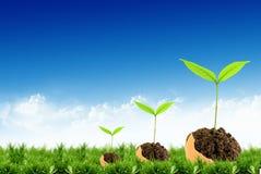 детеныши неба зеленого завода предпосылки Стоковое Изображение RF