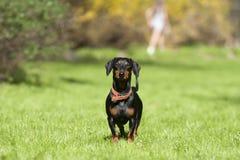 детеныши парка травы собаки Стоковое фото RF
