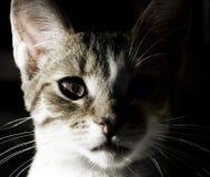 детеныши портрета кота стоковые изображения