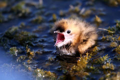 детеныши птицы Стоковые Изображения RF
