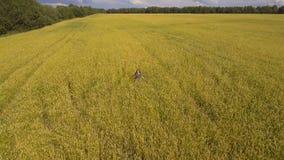 детеныши пшеницы девушки поля Воздушное видео видеоматериал