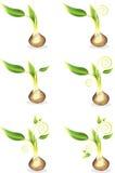 детеныши ростка семени Стоковое Изображение RF