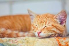 детеныши спать котенка Стоковое Фото