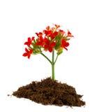детеныши цветка Стоковые Изображения RF