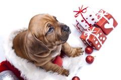 детеныши doggy счастливые стоковые изображения rf
