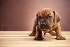 детеныши doggy счастливые стоковая фотография rf