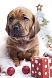 детеныши doggy счастливые Стоковое фото RF