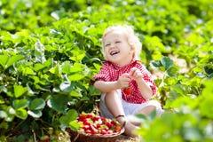 Дети выбирают клубнику на поле ягоды в лете Стоковая Фотография RF