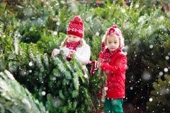 Дети выбирают рождественскую елку Семья покупая дерево Xmas Стоковые Изображения