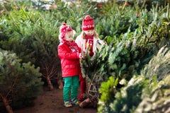 Дети выбирают рождественскую елку Семья покупая дерево Xmas Стоковое Изображение