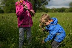 Дети выбирая вверх цветут на луге Стоковые Изображения RF