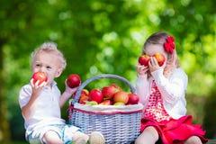 Дети выбирая свежие яблока Стоковое Изображение