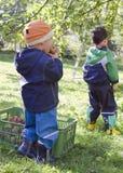 Дети выбирая яблока Стоковая Фотография