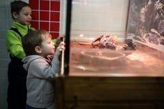 Дети в зоопарке Стоковая Фотография RF