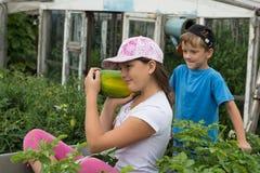 Дети в тачке сада outdoors Овощи сбора Стоковая Фотография RF