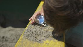 Дети горя деревянное лупой в солнечном свете, солнечном луче или солнечности акции видеоматериалы
