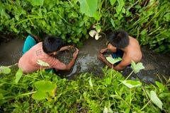 дети задвижки окапывают рыбы малые Стоковые Изображения