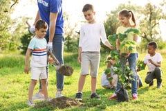 Дети засаживая дерево с волонтером стоковая фотография rf