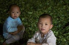Дети играя в деревне в листьях чая Стоковые Фото
