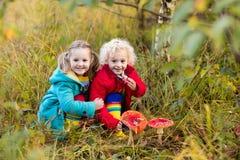 Дети играя в лесе осени Стоковое фото RF
