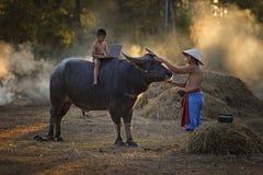 Дети играя компьютер и ехать буйвол с его отцом дальше во время захода солнца Стоковое Изображение