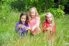 Дети играя на луге лета Стоковое Изображение