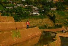 Дети играя на рисе field в севере Вьетнама Стоковая Фотография RF
