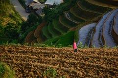 Дети играя на рисе field в севере Вьетнама Стоковое фото RF