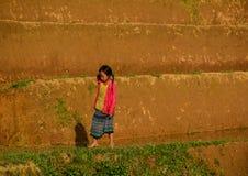 Дети играя на рисе field в севере Вьетнама Стоковые Изображения RF