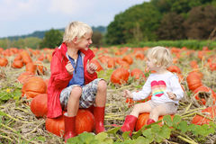 Дети имея потеху на поле тыквы Стоковые Изображения RF