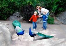 Дети и мать на зоопарке с павлином стоковая фотография rf