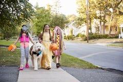 Дети и собака в костюмах хеллоуина для фокуса или обрабатывать стоковые изображения