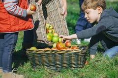 Дети кладя яблока внутри корзины с плодоовощ Стоковое фото RF