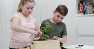 Дети моча зеленое дерево в деревянной коробке акции видеоматериалы