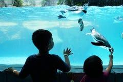 Дети наслаждаясь наблюдающ пингвина Стоковые Фотографии RF