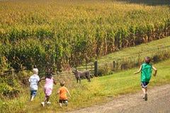 Дети наслаждаясь стороной страны Beaurtiful Стоковое Изображение RF