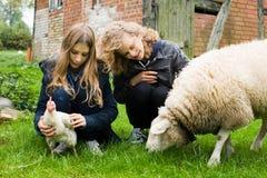 Дети на ферме стоковые фотографии rf